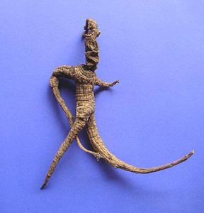 About American Ginseng