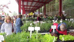 Spring Herb Festival
