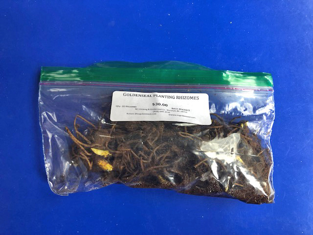 Ginseng Seeds Available Now! – NC Ginseng & Goldenseal Company