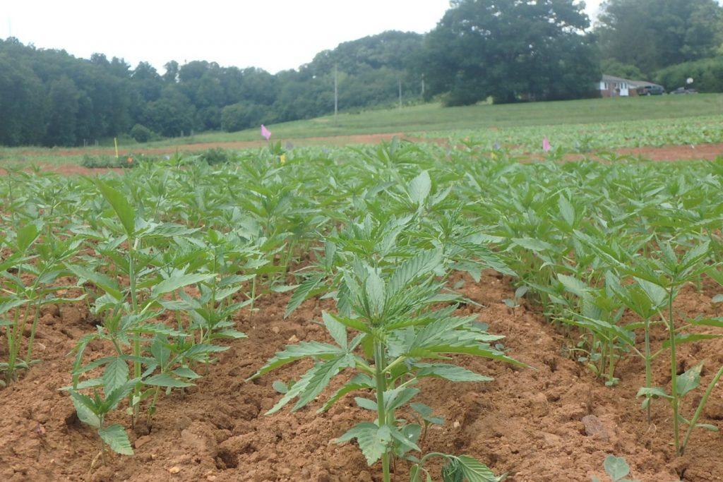 2018 Farm Bill – NC Ginseng & Goldenseal Company